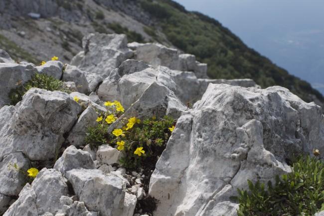 Foto Blume im Felsen